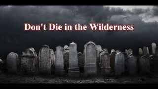 Don't Die in the Wilderness