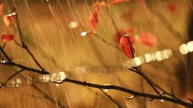 Heavy Rain Thunder with Bible Scripture: Psalms chpt 1, 23,