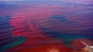 Red Tide returning to Florida, Is the a connection to