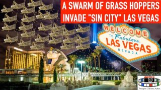 "🇺🇸A SWARM OF LOCUST INVADE ""SIN CITY"" LAS VEGAS 🦗🦗🦗"