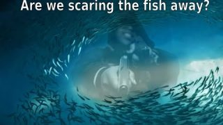Are we scaring the fish away? Revised Message 2015