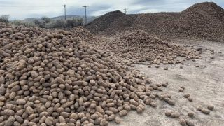 Food Shortage Warning! Potato Farmers are dumping their crops