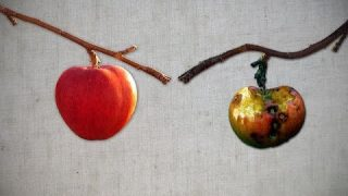 What Kind of Fruit are you Bearing on Your Tree?